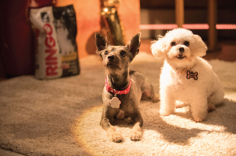 Perros de Daiky y Dani Duke en videoclip