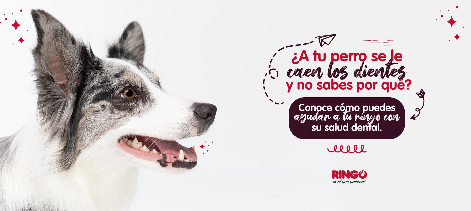 Cuidado dental en cachorros y perros senior