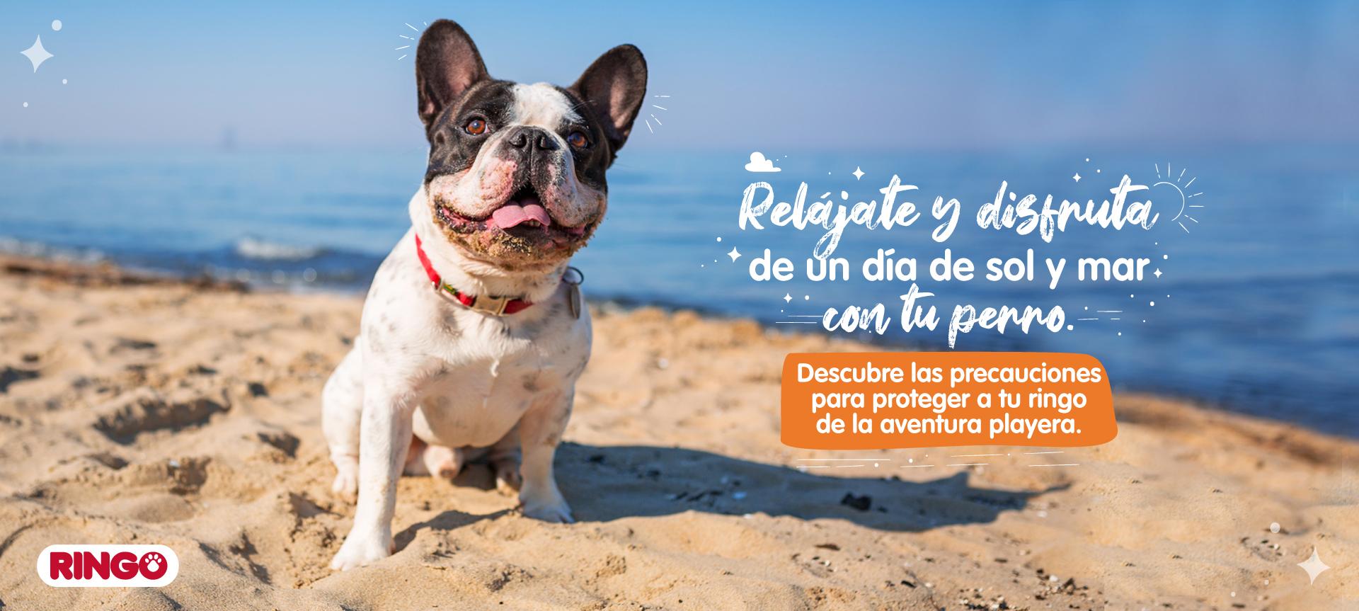 Cómo cuidar a mi perro en un día de playa