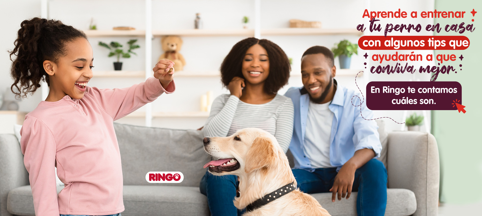Consejos para entrenar a tu perro en casa