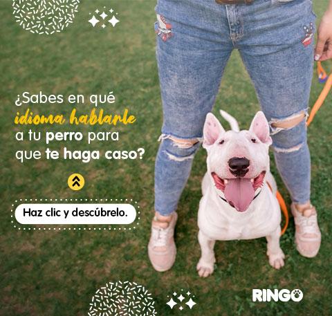 El mejor idioma para hablarle a tu perro