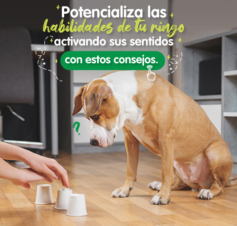 Juegos de inteligencia y olfativos para perros