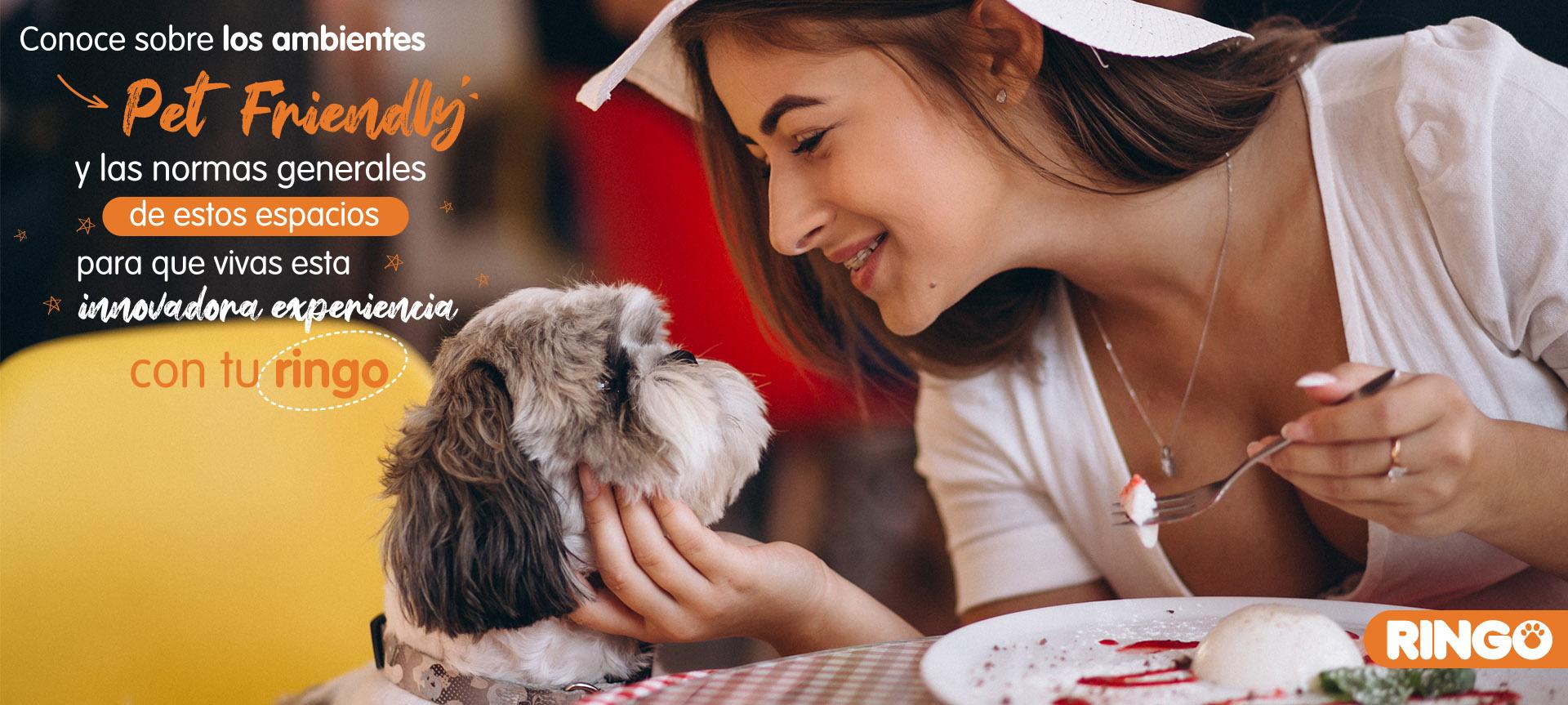 Ambientes Pet Friendly para perros