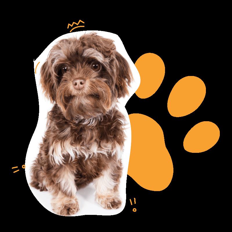 Mascotas en adopción
