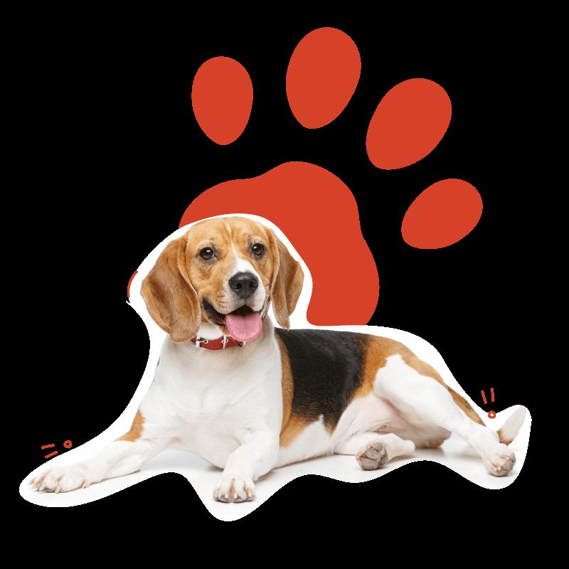 Adopción de perros cachorros