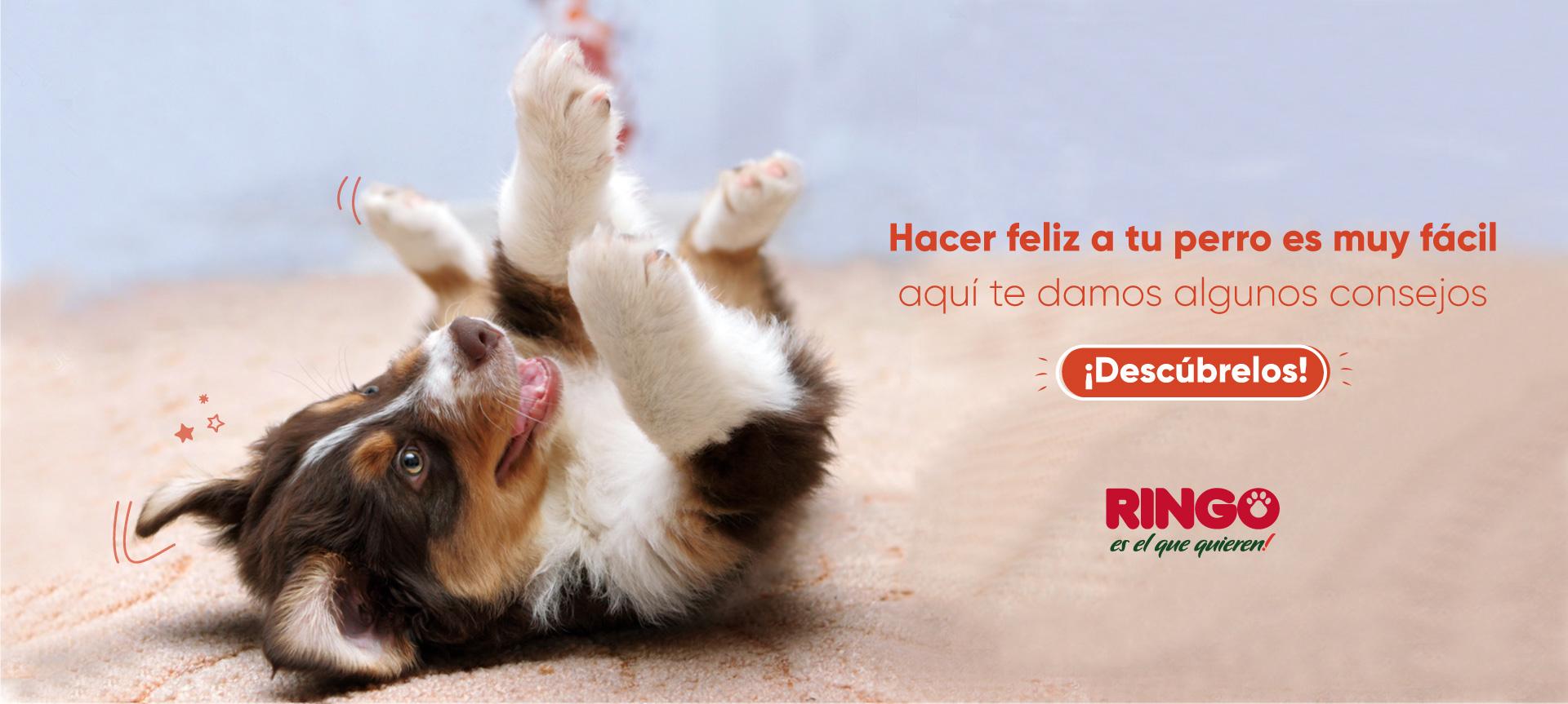 Haz feliz a tu perro