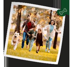 Actividad física con tu perro