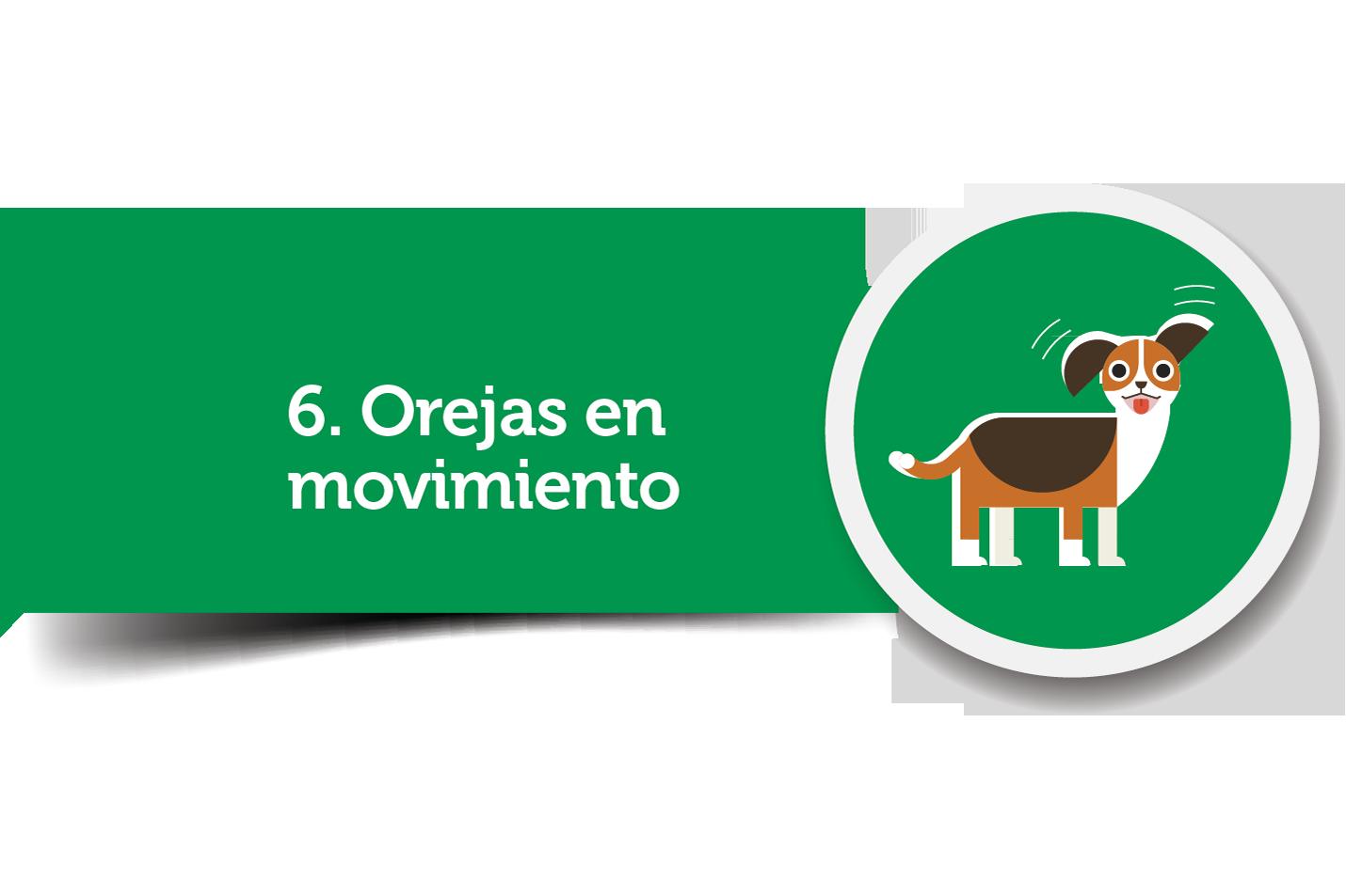 Orejitas en movimiento del perro