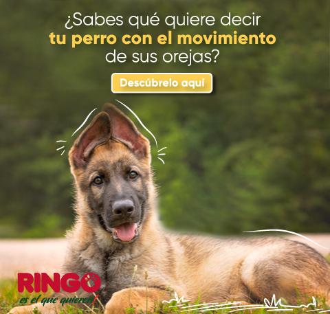 significado del movimiento de las orejas de tu perro