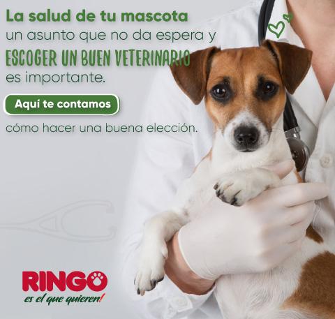 Encuentra al mejor veterinario