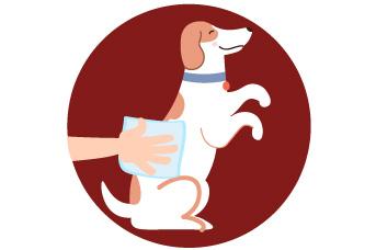 Evita limpiar la patas del perro con alcohol o antibacterial