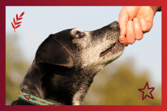 Cuidado en la alimentación de un perro Senior