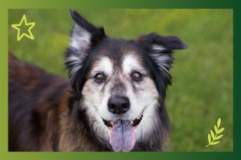 Cuidados de un perro anciano